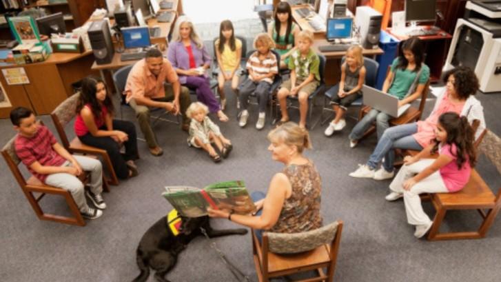 dog_escola