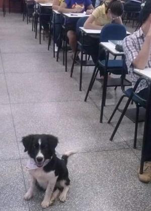 professor-leva-cachorros-para-universidade-1472058609762_300x420